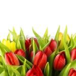 Модульная картина тюльпаны. код 2-1 (120*93 см)