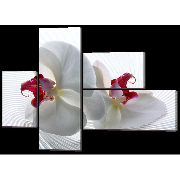 Две орхидеи 131* 96,5 см Код: w7188